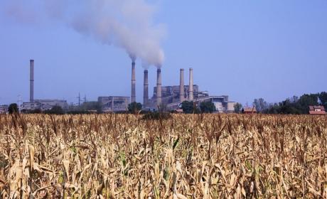 Cornfields Kosova A