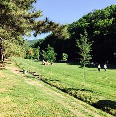 Pamje nga parku i G�rmis�, Prishtin�, ku �sht� parapar� pozicioni i pun�s n� hortikultur�. Foto: Gazeta Jeta n� Kosov�